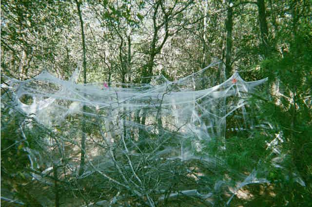 صور تدل علي معجزات الخالق ((تابع للمسابقهـ)) spider.jpg